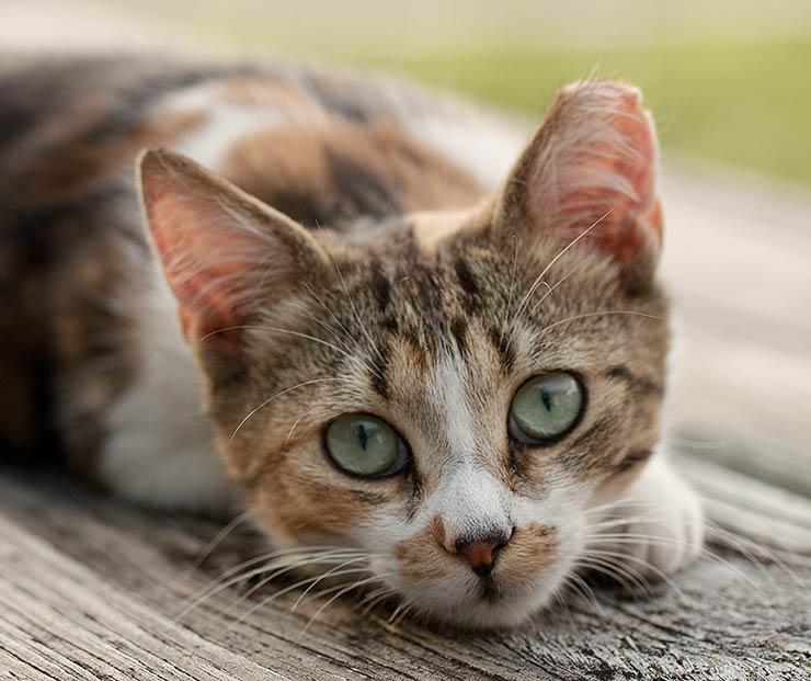 ear-tipped-kitty2